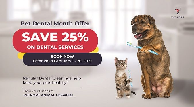 veterinary offer card